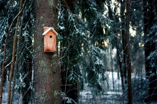 Fågenholk i skogen
