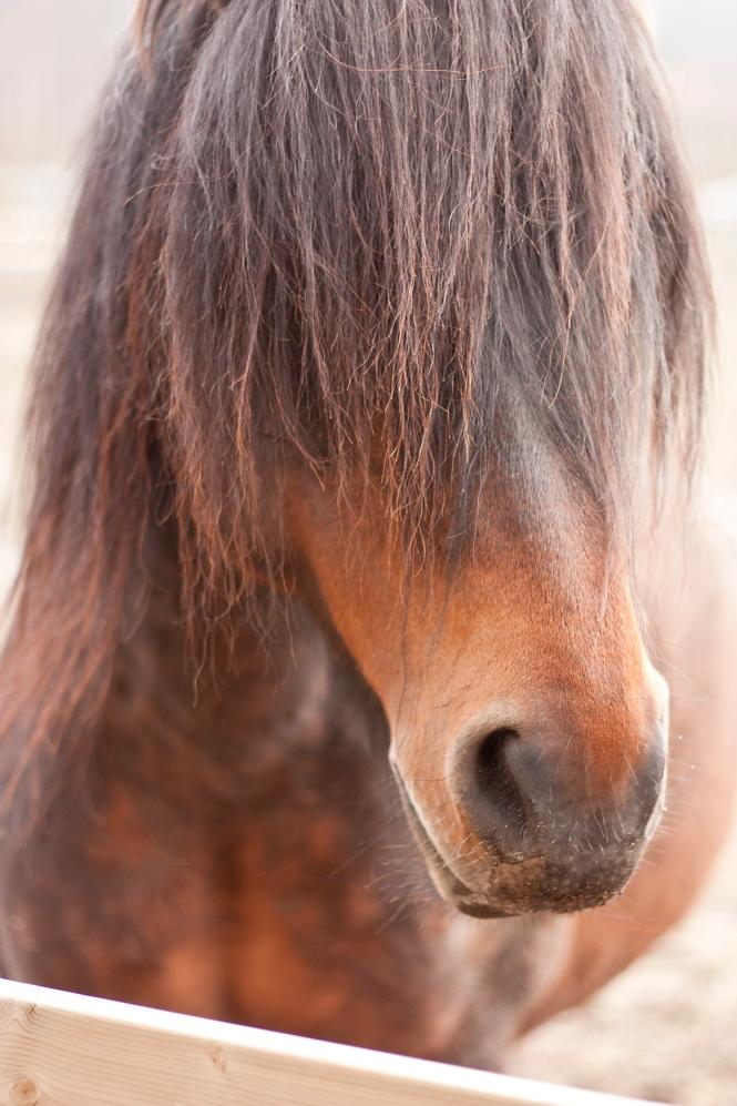 Häst 2