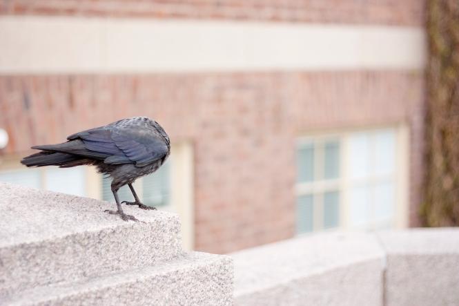 Fågel utan huvud